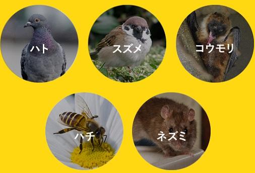 ハト・スズメ・コウモリ・ハチ・ネズミ