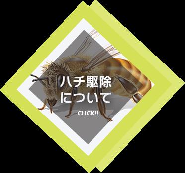 ハチ駆除について