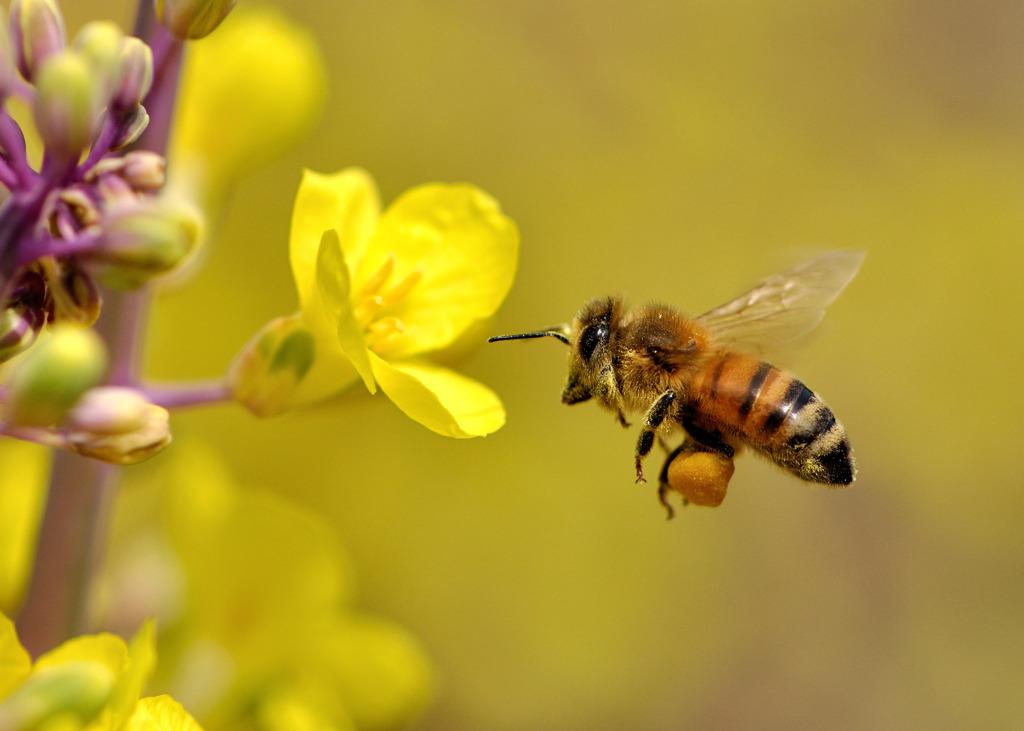 u30df u30c4 u30d0 u30c1 u306e u5de3 u4f5c u308a u3068 u5973 u738b u8702 u306e u5f79 u5272  u718a u672c u30b7 u30ed u30a2 u30ea u99c6 u9664 com clip art of bees eating clip art of bees eating