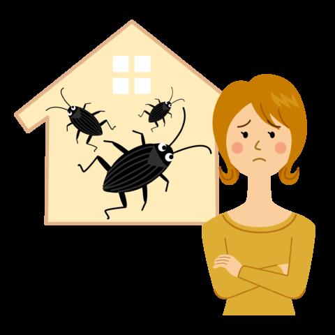 家のゴキブリ