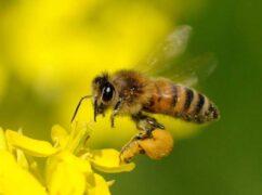 ミツバチの巣1