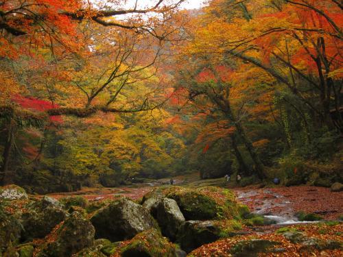 菊池渓谷 紅葉