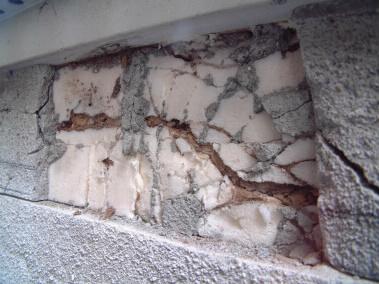 断熱材のシロアリ被害