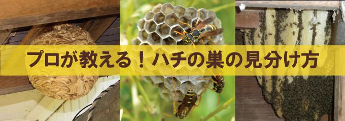 プロが教えるハチの巣の見分け方