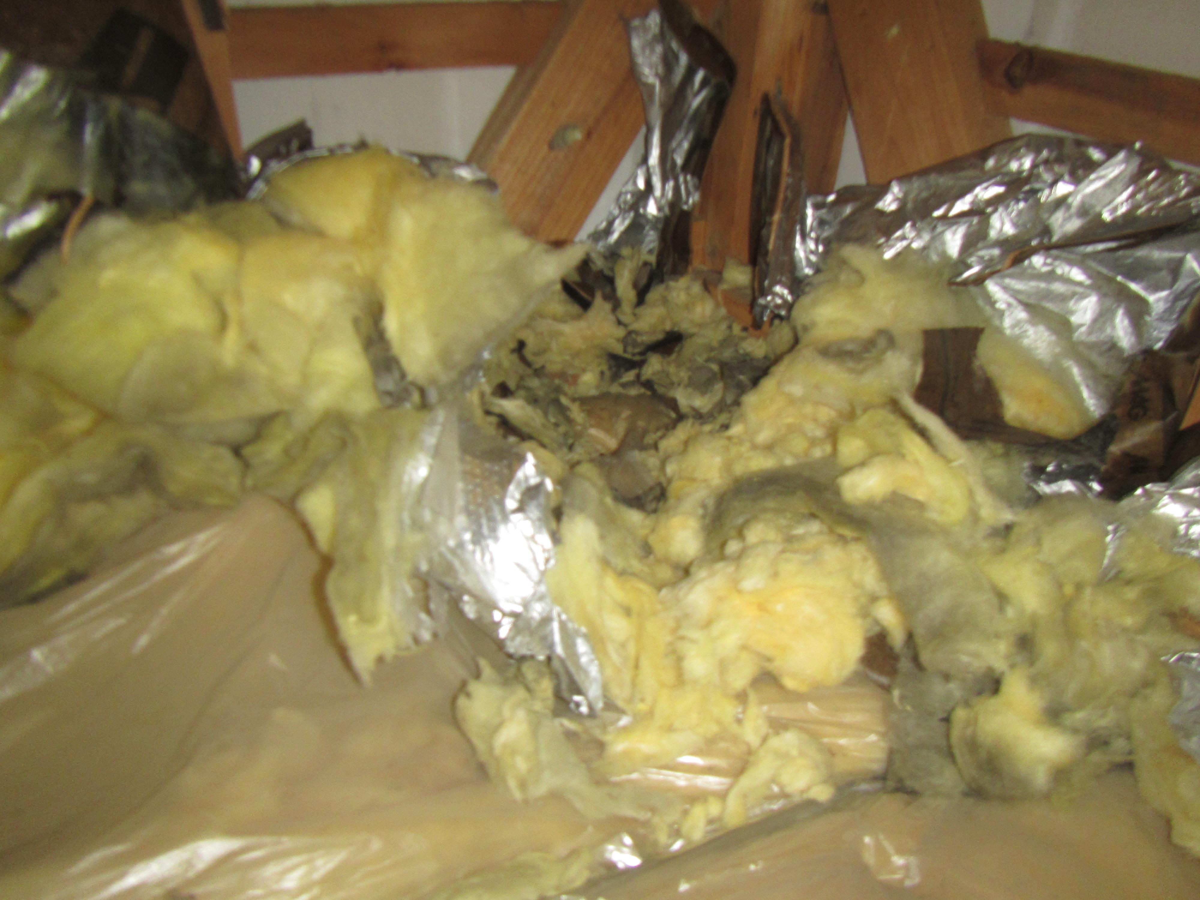 断熱材を利用したイタチの巣