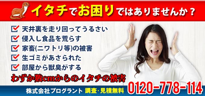 610317_20151015
