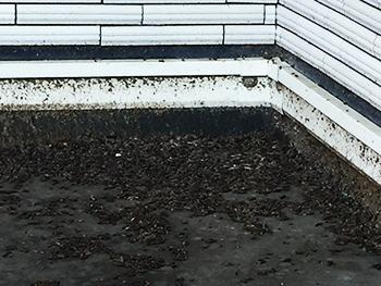 玄関横に溜まったコウモリの糞