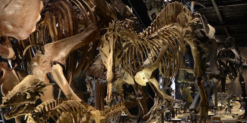 御船町 恐竜博物館