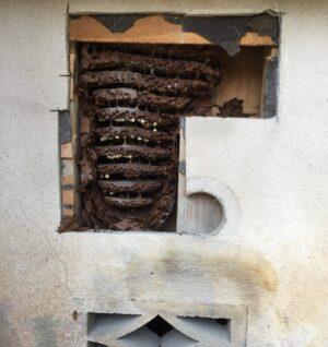 壁の中のスズメバチの巣