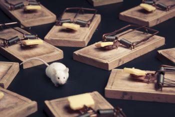 バネ式罠に囲まれるネズミ