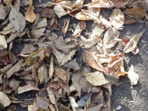落ち葉のイメージ写真