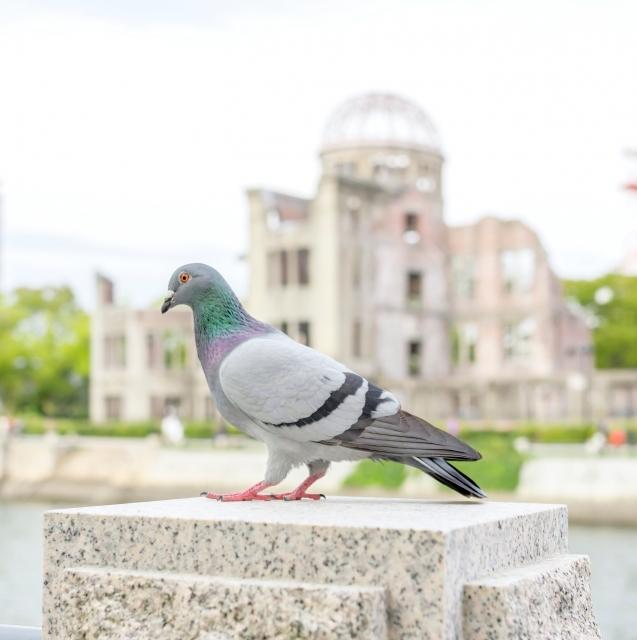平和のシンボル ハト
