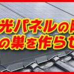 【鳩駆除15,000円~】熊本全域対応!鳩駆除・対策ならお任せください!