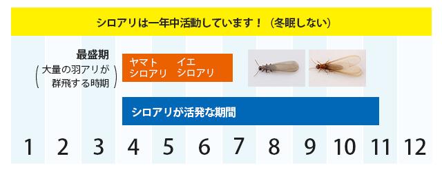 佐賀県のシロアリカレンダー