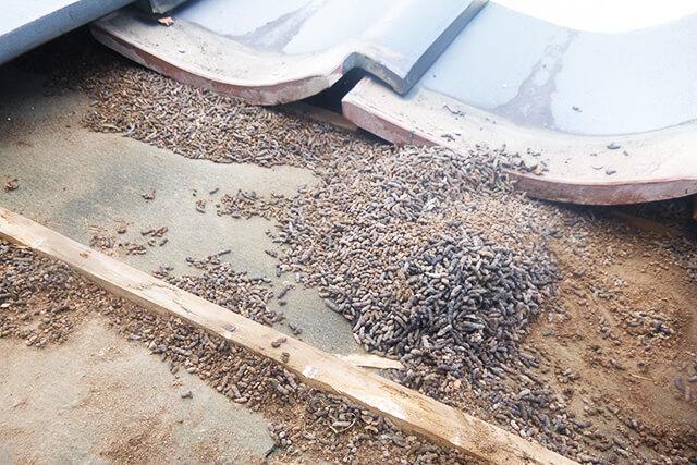 瓦を剥がすと大量のコウモリの糞が!