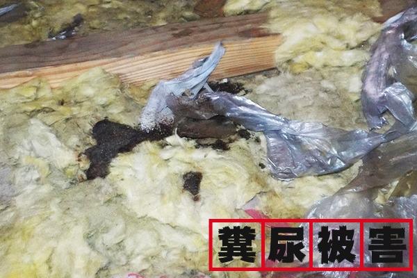 アライグマの糞尿被害