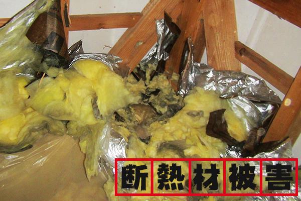 断熱材の被害